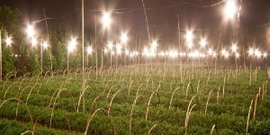Farm Lighting And Led Barn Lamps For Outdoor Perimeters